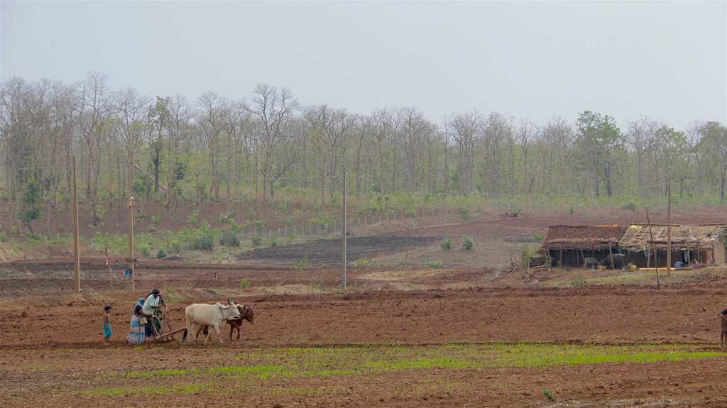 5-korku-farms